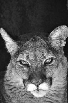 Beautiful face & weirdly intelligent, human-like eyes.