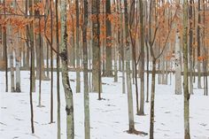 Winter Calm. Peter Rotter.