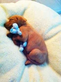 This little puppy got tired from eating all his roast beef:   20 Puppies Cuddling With Their Stuffed Animals During Nap Time