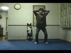 ▶ Japanese Dog Doing Squats - YouTube
