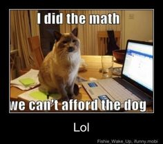 I Did The Math Cat - Can't Afford The Dog