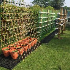 set up of cabbage, lettuce, beetroot, broccoli in the gutters and melons and squash under the trellis by Charlie Brown