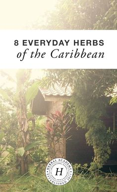 Go on a journey with herbalist Ayo Ngozi and discover 8 herbs commonly used in the Caribbean including their traditional use, energetics, and properties.