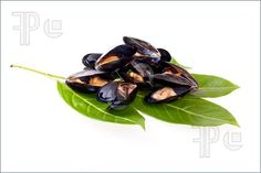 Picture of Stewed mussels on privet leaves isolated on white background.