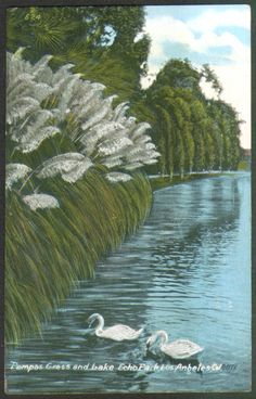 Vintage postcard of Echo Park with pampas grass.