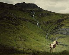 I've spent years photographing horses across North America, but there has been one horse that always eluded me. The Icelandic horse.   I had the special opportunity to visit Iceland this year and travel around the country in search of these majestic animals.