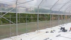 Impianto RTW multilivello per la coltivazione del fagiolino -         HYDROINVENT s.r.l.