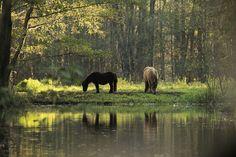 ღღ Back to Nature - Spreewald