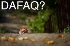 DAFAQ?