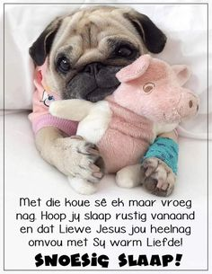 Good Night Wishes, Good Night Quotes, Afrikaanse Quotes, Goeie Nag, Special Quotes, Sleep Tight, French Bulldog, Sayings, Words