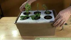 Indoor Gardening: DIY Hydroponics Water Culture System