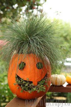 "Super cute or autumn decorating idea for the porch. [Pumpkin Planter - Love the ""hair"" on this jack o lantern] Super cute or autumn decorating idea for the porch. [Pumpkin Planter - Love the ""hair"" on this jack o lantern] Dulces Halloween, Fete Halloween, Holidays Halloween, Halloween Pumpkins, Halloween Crafts, Happy Halloween, Halloween Decorations, Halloween Jack, Fake Pumpkins"