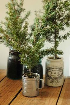 Pine tree cuttings in antique or collector containers. Florist foam base. Potting soil. Mulch or moss on top. Water regularly and these should last on your tabletop.Houzz.com