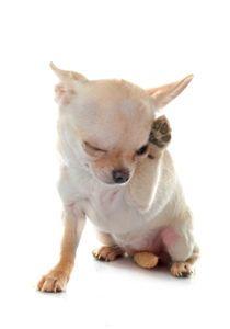 Does Your Dog Have Allergies - The Hartz Blog  Hartz Pet ...