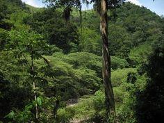 Datos sobre la tierra en Honduras.