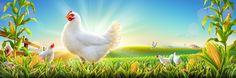 Illustration done for Radwa poultry farm . Blue Sky Clouds, Cartoon Background, Islamic Art, Farm Chicken, Poultry, Bird, Youtube Logo, Behance, Illustration