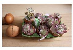Un centre de table tout simple mais qui en jette pour votre repas de pâques sur le blog!
