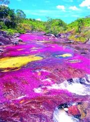 Caño Cristales, located in the Sierra de la Macarena - Colombia. It is known as the river of five colors, because the production of algae, which form a rainbow on his bed just beauty The Places Youll Go, Places To See, Beautiful World, Beautiful Places, Mind Blowing Images, Rainbow River, Colombia Travel, Fjord, South America Travel