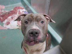 JACK - A1106066 - - Brooklyn  TO BE DESTROYED 03/29/17****MUST BE PULLED BY A NEW HOPE RESCUE**** -  Click for info & Current Status: http://nycdogs.urgentpodr.org/jack-a1106066/