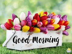 Are you searching for images for good morning motivation?Check out the post right here for cool good morning motivation ideas. These enjoyable images will bring you joy. Good Morning For Him, Good Morning Handsome, Good Morning Cards, Good Morning Picture, Good Morning Flowers, Good Morning Sunshine, Good Morning Wishes, Morning Pictures, Morning Quotes For Friends