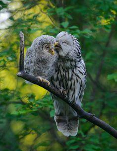 Owls, so frickin sweet....lol