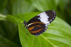 Butterflies LIVE! at Lewis Ginter Botanical Garden    (Photo by Garrett McLees)