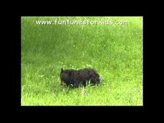 Fun song about different types of bears. Sing, dance and learn with us.  Please go to our website at www.funtunesforkids.com to find more fun tunes.    ~Thank you for listening~