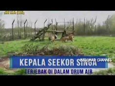 On The Spot T7 Terbaru ~ Aksi Aksi Lucu Hewan Buas