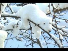 Nature made a snow-bear! Polar bear sculpture created by snow accumulated on a branch. Via FB I Love Snow, I Love Winter, Winter Fun, Winter Snow, Winter White, Winter Season, Snow Scenes, Winter Scenes, Ice Art
