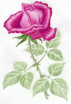 2cd22234f9 Very simple how to draw a rose step by step tutorial. Rose Step By Step