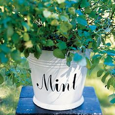 must incorporate mini mint plants somehow!