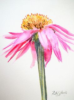 A Single Pink Echinacea Flower Painted In Watercolor On A White Background. Basic And Elegant. The Original Work Measures And Is Painted On Fabriano Artistico Paper. Purchase This Artwork On Stickers, Stationery Y Wall Prints. Watercolor Pictures, Watercolor Cards, Watercolour Painting, Floral Watercolor, Painting & Drawing, Watercolors, Easy Watercolor, Illustration Blume, Watercolor Illustration