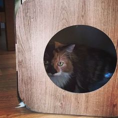 Babs is gorgeous!  I'm glad she likes her pod and the catnip  Haha!  #cat #catsofinstagram #cats_of_instagram #catfurnature #catfurniture #catsinboxes #cattoy #INSTACAT_MEOWS #cutecat #PurrMachine #catsinboxes #catbox #Excellent_Cats #BestMeow #dailykittymail #thecatniptimes #catcube #catpod #ArchNemesis #FlyingArchNemesis #myindoorpaws #ififitsisits #cutecatcrew #catchalet #catnip #themeowdaily #kitty #dailykittymail #catgrass