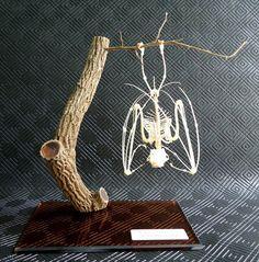 Real Genuine Sleeping Bat Skeleton Taxidermy Skull Art Bone (BB-096) in Crafts   eBay