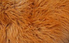 Fur Texture 8 by BFstock