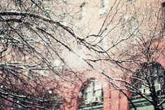 nyc, pink & snow