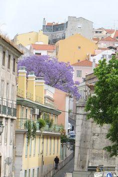 Jacaranda in Lisboa