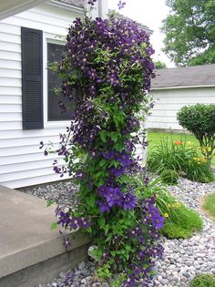 flower pot ideas for front porch   This is the one on the other side of the front porch.....