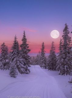 Soft Nocturne, I love winter scenery Soft Nocturne Winter Szenen, I Love Winter, Winter Magic, Winter Moon, Winter Sunset, Norway Winter, Winter Trees, Winter Photography, Landscape Photography