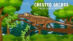 An Introduction To Crested Geckos & Their Care! Crested Gecko Care, Geckos, Make It Simple, Animation, History, Pets, Fun, Animals, Historia