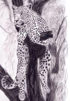 'Leopard in Kohle' von Susanne Edele bei artflakes.com als Poster oder Kunstdruck $16.63