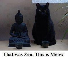 That was Zen this is Meow!