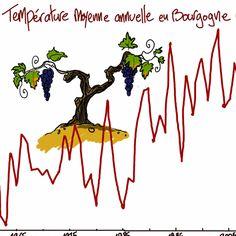 La vigne face au changement climatique en Bourgogne