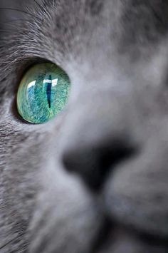 Beautiful!!! #cat #cats #cute =^..^= www.zazzle.com/kittyprettygifts