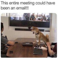 #memes #work #workmemes #funny #lol #workfromhome #memepage #workmemes #workproblems #workfromhomelife #supervisor #badboss #work #career #meeting #coworker #boss #january #meetings #virtualmeetings #zoom #emails #worklife Funny Cat Fails, Funny Cats And Dogs, Funny Cat Memes, Funny Cat Videos, Funny Stuff, Cats Humor, Humor Videos, Stupid Memes, Humor