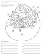 1000 images about educ 423 on pinterest biology for Animal cell coloring pages