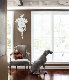 Brighten up your whites by placing them against a backdrop of warm brown. In this Kansas colonial, Fay the Weimaraner strikes a pose next to a linen-upholstered antique armchair. The owners bought the white cuckoo clock at The Conran Shop. Outside House Paint Colors, Paint Colors For Home, Benjamin Moore Weimaraner, Benjamin Moore Brown, Brighten Whites, Paint Color Schemes, Home Decor Furniture, Room Colors, Architecture