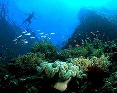 Exploring Indonesia Dive Report
