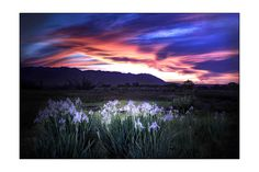 Sunset and flowers, Bishop California