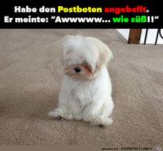 lustiges Bild 'Habe den Postboten angebellt.png'- Eine von 60542 Dateien in der Kategorie 'Lustiges' auf FUNPOT.